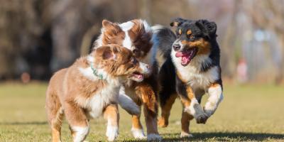 3 Tips for Socializing Adult Dogs, Honolulu, Hawaii