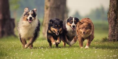 3 Reasons to Consider Doggy Day Care for Your Pet, Honolulu, Hawaii