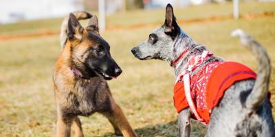 How to Introduce Your Dog to Other Dogs, High Point, North Carolina
