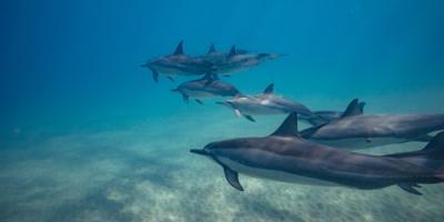 The Do's & Don'ts of Dolphin Watching, Waianae, Hawaii