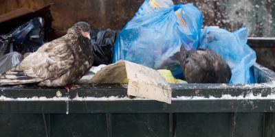 3 Helpful Dumpster Rental Tips for the Winter, Jordan, Missouri