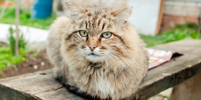 5 Best Senior Pet Care Tips, Dothan, Alabama