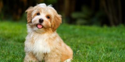 3 Reasons to Invest in Dog & Cat Microchipping, Denver, Colorado