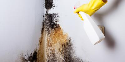 Mold on Your Drywall Ceiling? Here's How to Get Rid of It, West Adams, Colorado