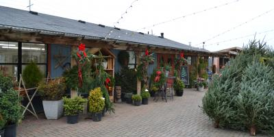 NEW PRICING ON CUT CHRISTMAS TREES AT LAKEVIEW GARDEN CENTER, Fairfield, Ohio