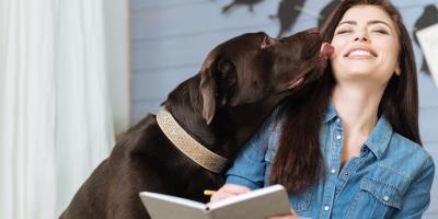 3 Ways Pets Affect HVAC Systems, Perry, Ohio