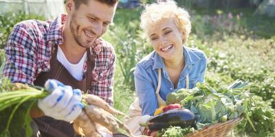 What You Should Know About Harvesting Your Vegetables, Anchorage, Alaska