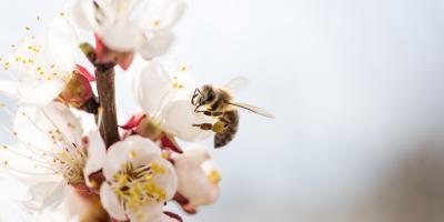 4 Tips to Attract Pollinators to Your Garden, Anchorage, Alaska