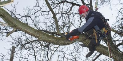A Guide to Training & Experience Required to be an Arborist, Guilford, Connecticut