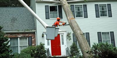 5 FAQ About Professional Tree Care, Guilford, Connecticut