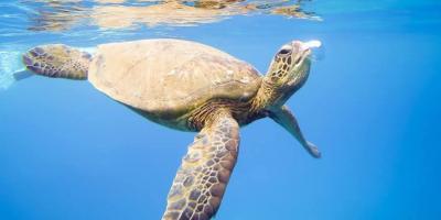 Promo Code: 20% Off Any Snorkeling Trip, Lahaina, Hawaii