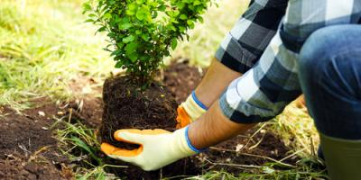 3 Foolproof Ways to Prepare Your Trees for Spring, Abbotts Creek, North Carolina