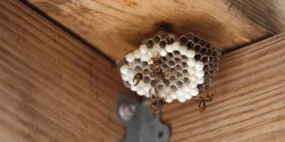 A Homeowner's Guide to Dealing With Stinging Insects, Amelia, Ohio