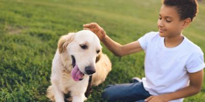 The Basics of the Pet Stop® Link™ , Elizabethtown, Kentucky