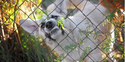 What to Do If You Encounter an Aggressive Dog, Elko, Nevada