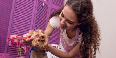 4 Common Dog Dental Issues, Elyria, Ohio