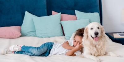 4 Signs You Should Take Your Dog to a Veterinarian, Elyria, Ohio