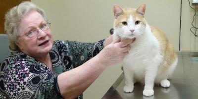 3 Tips on Caring for Senior Cats, Elyria, Ohio