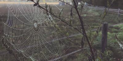 4 Common Types of Spiders in Alabama, Enterprise, Alabama