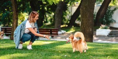 3 Summer Safety Tips for Pets, Enterprise, Alabama
