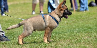 Churchville Kennel Shares 4 Basic Commands You Can Teach Your Puppy, Churchville, New York