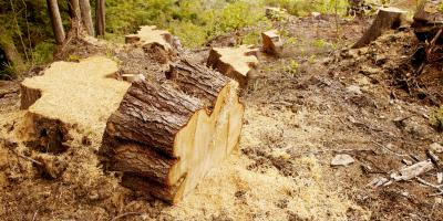 3 Signs a Property Needs Land Clearing, Helena Flats, Montana
