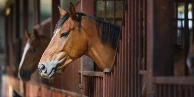 Why Fall Is the Best Time To Refinish Your Equine Facility, Lexington-Fayette Central, Kentucky