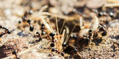 Keep Ants Out With These Tips From Your Local Exterminator, Hebron, Kentucky