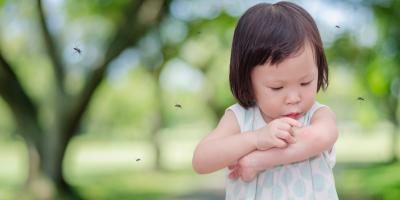 4 Key Mosquito Habitats to Watch For This Summer, Dayton, Ohio