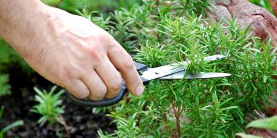 How to Keep Bugs Away Just by Gardening, Fairfield, Ohio