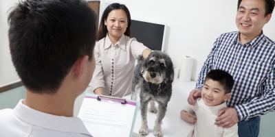 Veterinarian Lists 4 Benefits of Spaying & Neutering Pets, Fairfield, Ohio