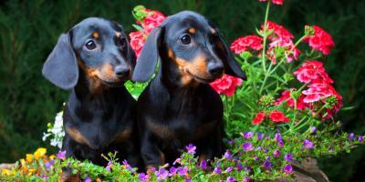5 Garden Plants Pet Owners Should Avoid, Fairfield, Ohio