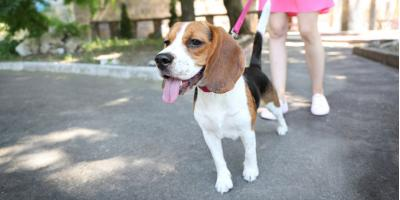 Pet Care Guide to Preventing Burned Paws During Summer, Fairfield, Ohio