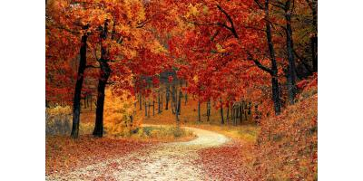 Fall Weather and Humidifiers...Click here to learn more!!, Forked River, New Jersey