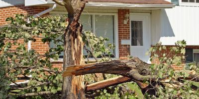 How to Protect Your Trees From Storm Damage, West Hartford, Connecticut