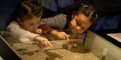 4 Family Activities to Keep Your Kids Learning This Summer, Memphis, Tennessee