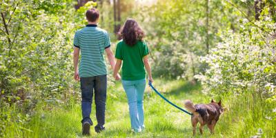 4 FAQ About Dogs & Lyme Disease, Manhattan, New York