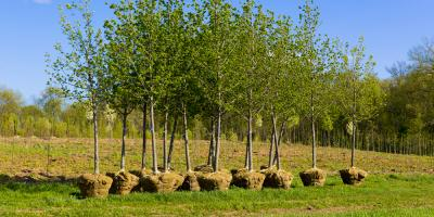 When Is the Best Time of Year for Tree Planting?, Fargo, North Dakota