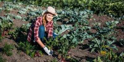 3 Fantastic Benefits of Farm Insurance, Spencerport, New York