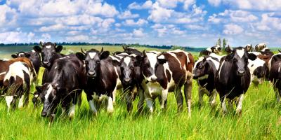 What You Need to Know About Farm Insurance, Coolville, Ohio
