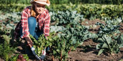What to Know About Farm Insurance, David City, Nebraska