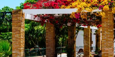 5 Gorgeous Plants to Grow on an Arbor, Farmers Branch, Texas