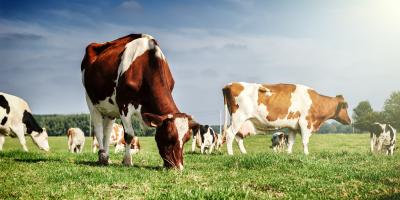 What You Should Know About Heat Abatement in Dairy Cattle , Adams, Wisconsin