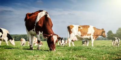 The Do's & Don'ts of Incorporating Fat Into Your Livestock Feed, Adams, Wisconsin