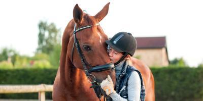 4 Basic Horse Care Tips For New Owners, Whiteville, Arkansas