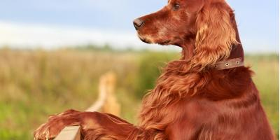 3 Factors to Consider When Installing a Fence for a Big Dog, Hilton, New York