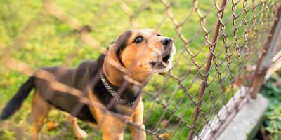 3 Tips for Choosing a Dog-Friendly Fence, Green, Ohio