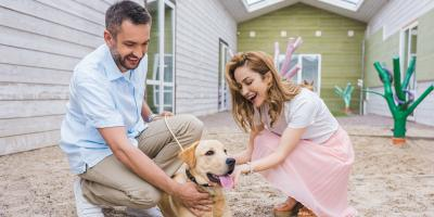 3 Tips for Teaching Dogs About Invisible Boundaries, Johnstown, New York