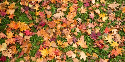 Maintain a Gorgeous Lawn Through the Fall With These Top Landscaping Tips, Coventry, Rhode Island