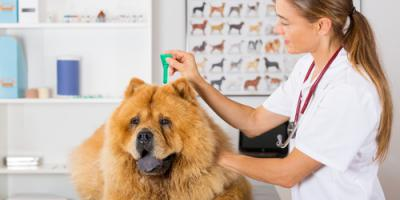 The Importance of Year-Round Flea Control & Prevention, Amsterdam, Virginia